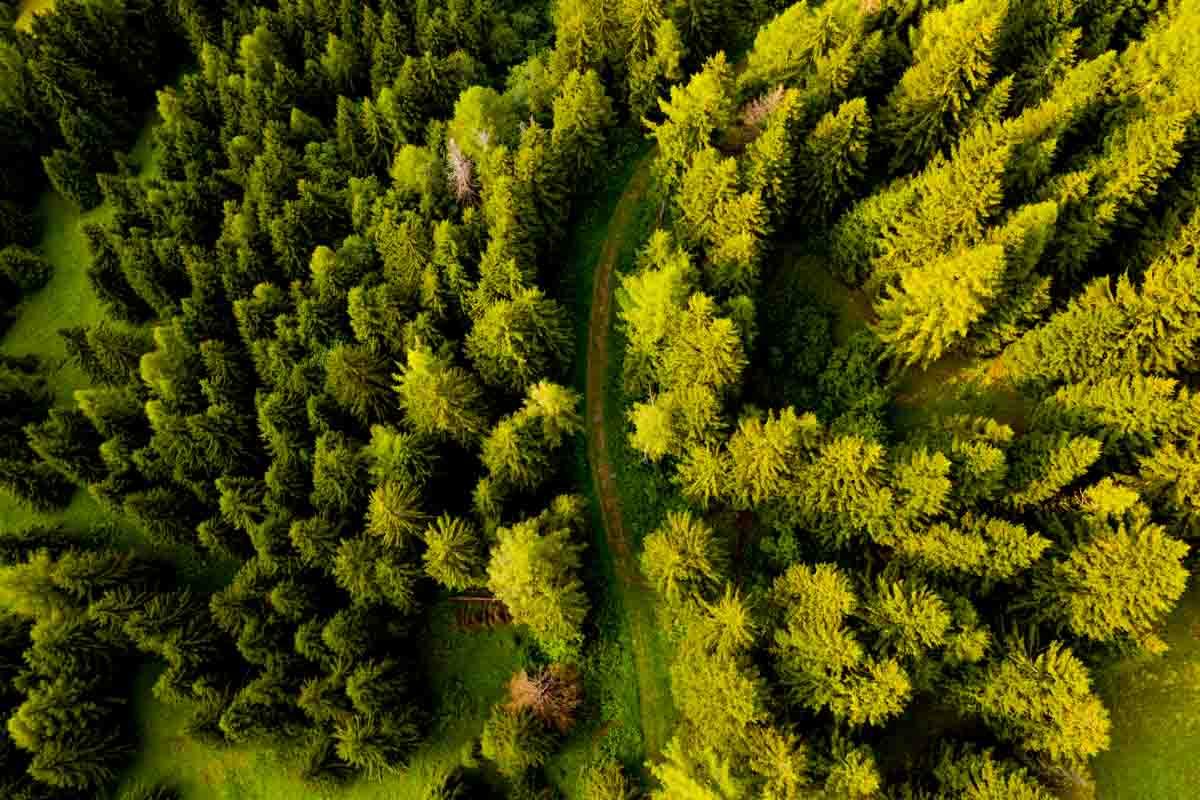 Sentiero nel bosco per ebike